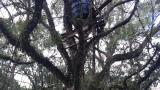 Homem fica gravemente ferido após despencar de uma árvore em Monte Castelo