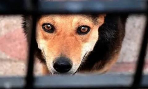 Lei prevê multa de até R$ 20 mil para quem pratica maus-tratos contra animais em SC