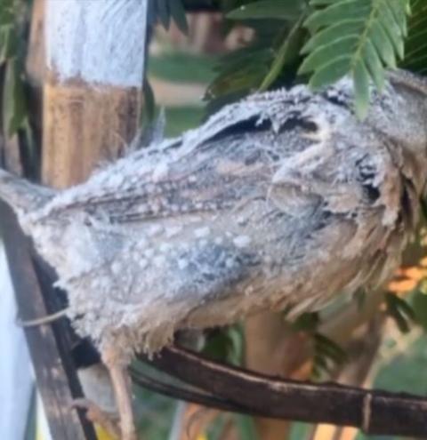Pássaro fica congelado após noite de temperaturas negativas